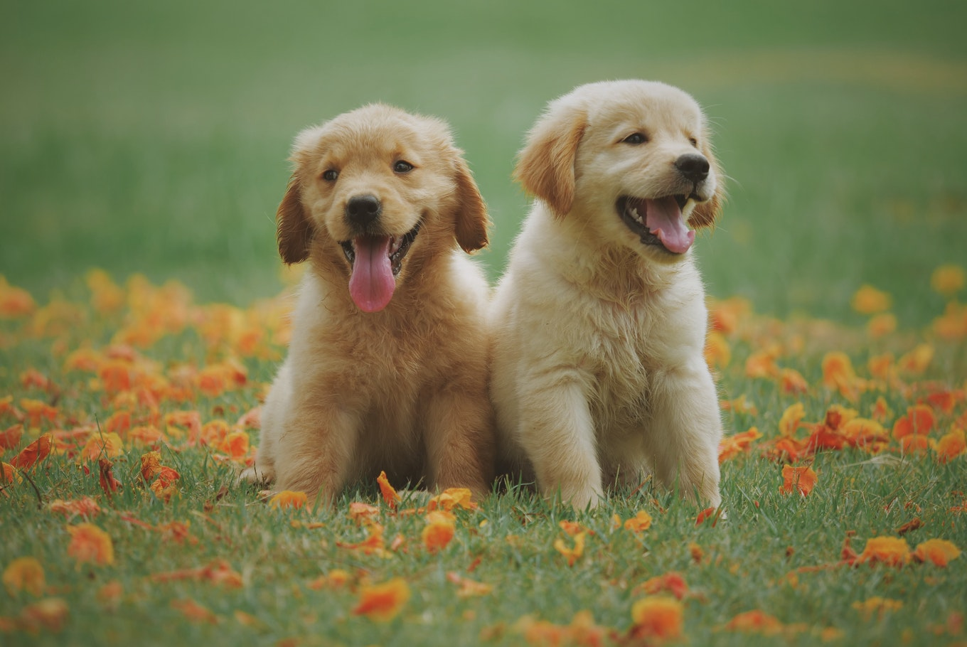 Dog Friendly Accommodation & Other Canine Information